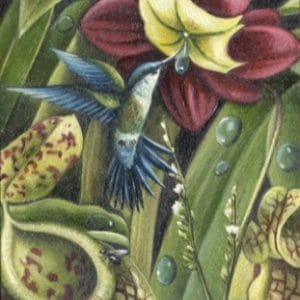 Griesbach &Martucci - Hummingbird