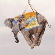 Cabaret+Elephant_Detail_7